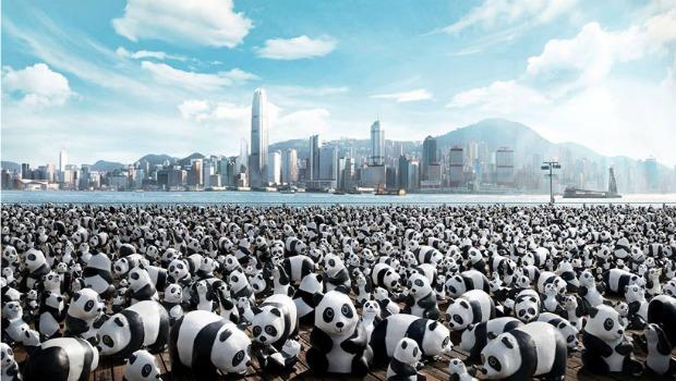 1600-pandas.jpg