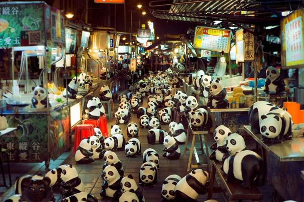 1600-pandas01