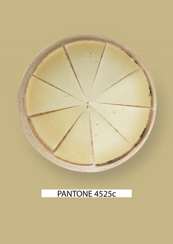 Pantone-food-queso-1