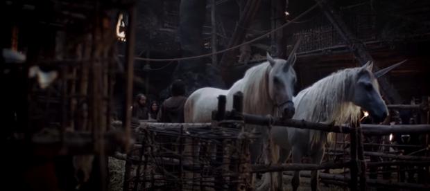 canal+-unicorns03