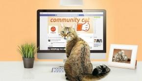 Community-cat