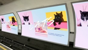 cats-london-advertising000