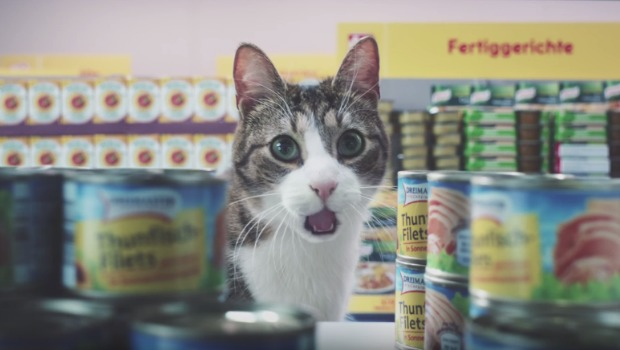 netto-cats-advert