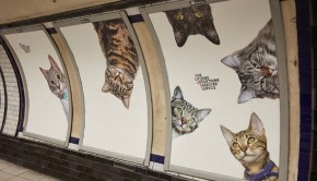 cats-not-ads0