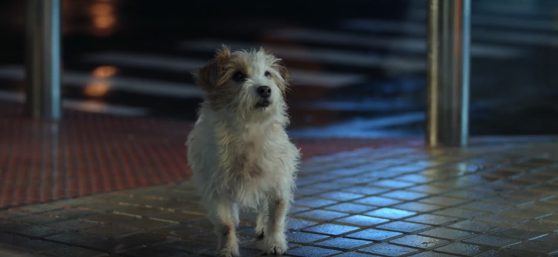 repsol-camino-perro-0000