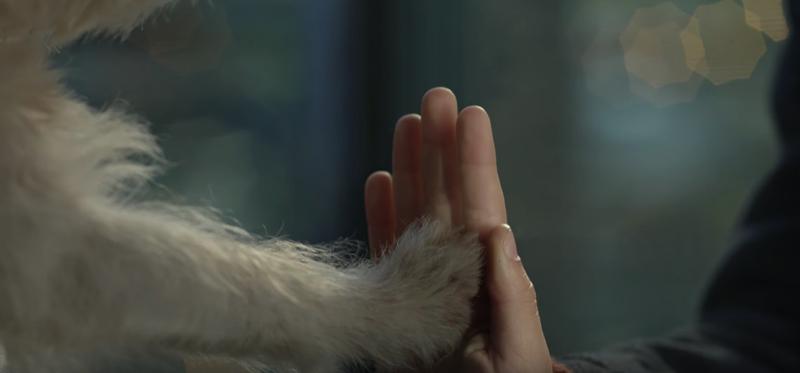 repsol-camino-perro-0003