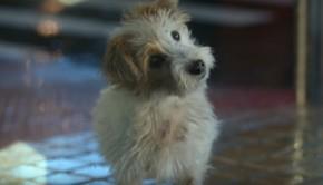 repsol-camino-perro
